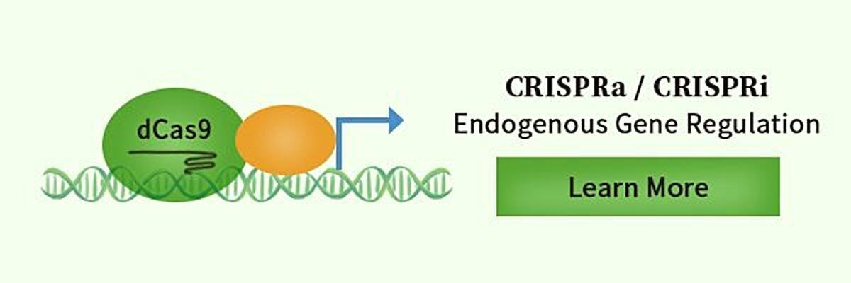 CRISPRa & CRISPRi in gene regulation.jpg